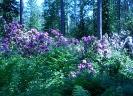 Mustilan Arboretumin kukkaloistoa