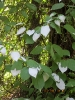 Kukkaloistoa Mustilan Arboretumista